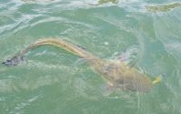 Einige kleiner Fische folgten noch...