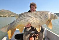 Traumhafte Fische gibt´s am Ebro: Hier ein Meterkarpfen!