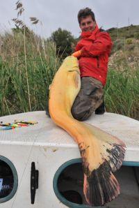 Viiiiel Gold - Ulis größter Goldfisch ever...