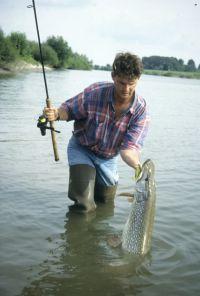 Flusshechte in kapitaler Größe sind oft schwieriger zu fangen...