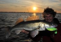 Sommer-Raubfische sind bestens fangbar!