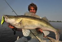 Uli Beyer mit tollem Sommer-Raubfisch