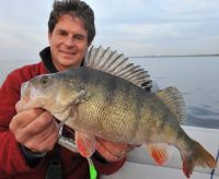 Bass Assassin Sea-Shad in 15 cm/ 6 inch sind ideal für Großbarsche!