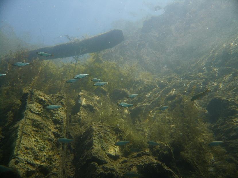 Der Blick aus der Fischperspektive: Schatten von oben verschrecken den Räuber!